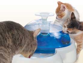Вода и витаминизированные напитки.